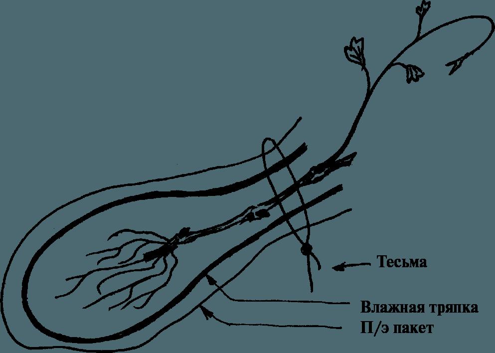 vinograd-v-teplicze-vybiraem-sorta-vinograda-dlya-tepliczy-4