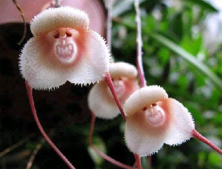 kak-uhazhivat-za-orhideej-foto-video-razmnozhenie-i-peresadka-orhidej-3