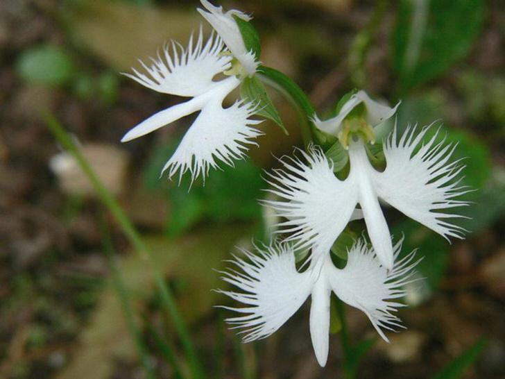 kak-uhazhivat-za-orhideej-foto-video-razmnozhenie-i-peresadka-orhidej-6