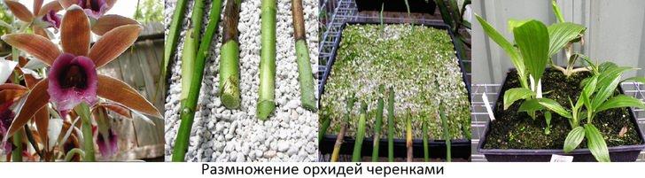 kak-uhazhivat-za-orhideej-foto-video-razmnozhenie-i-peresadka-orhidej-15