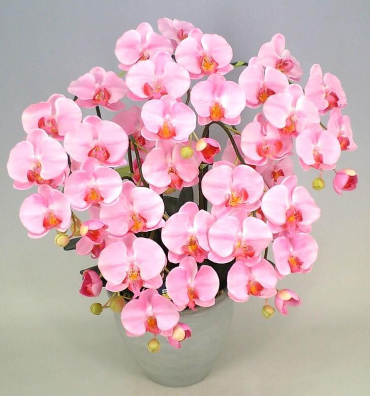kak-uhazhivat-za-orhideej-foto-video-razmnozhenie-i-peresadka-orhidej-11