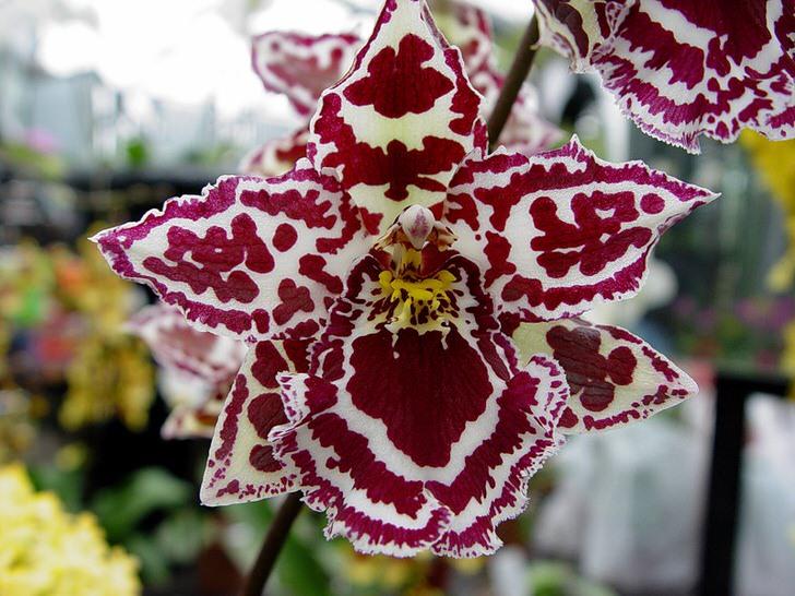 kak-uhazhivat-za-orhideej-foto-video-razmnozhenie-i-peresadka-orhidej-2
