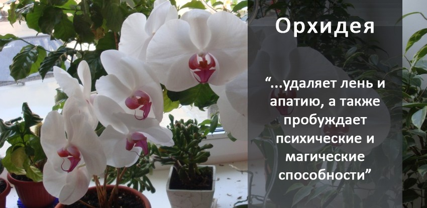 kak-uhazhivat-za-orhideej-foto-video-razmnozhenie-i-peresadka-orhidej