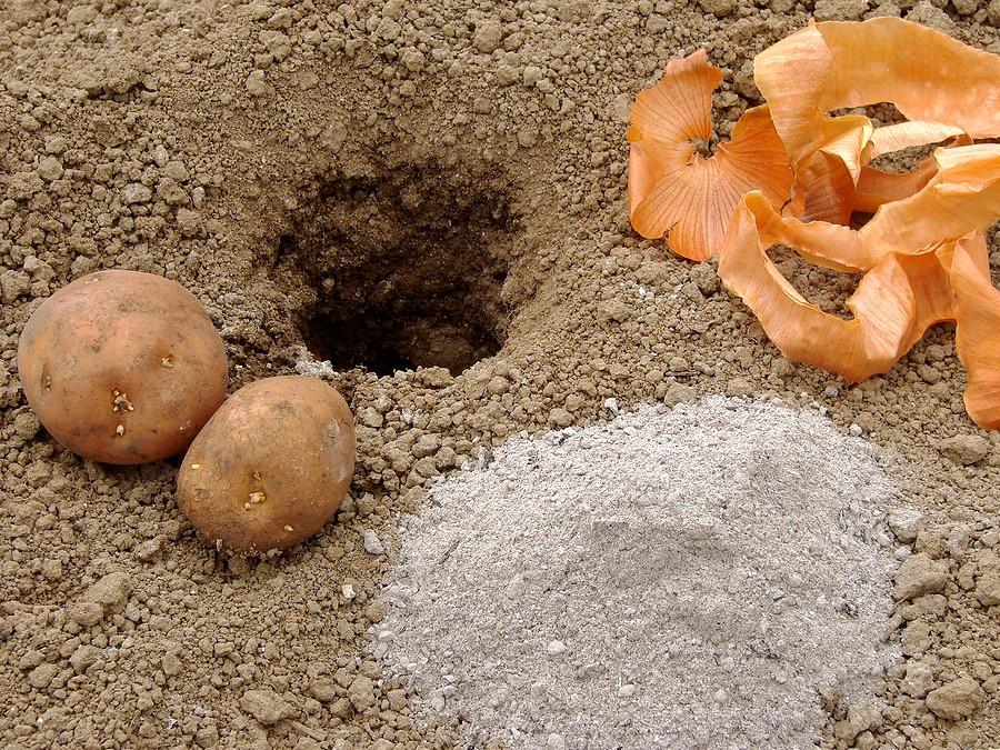 vyrashhivanie-kartofelya-opisanie-sortov-tehnologiya-posadki-2