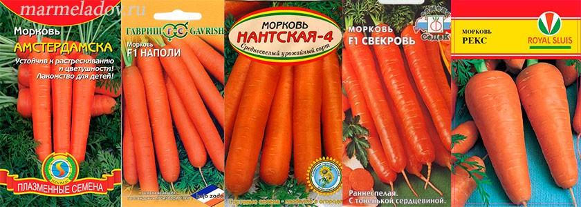 sorta-morkovi-foto-opisanie-i-obshhie-harakteristiki-3