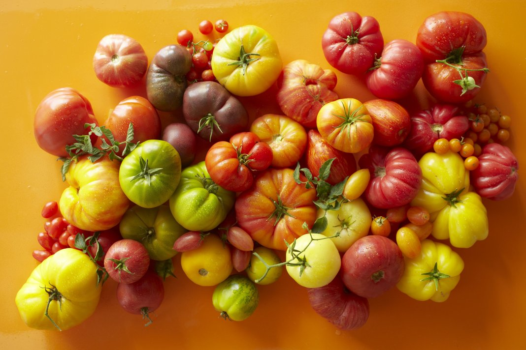 novye-sorta-pomidor-tomaty-dlya-tepliczy-i-otkrytogo-grunta