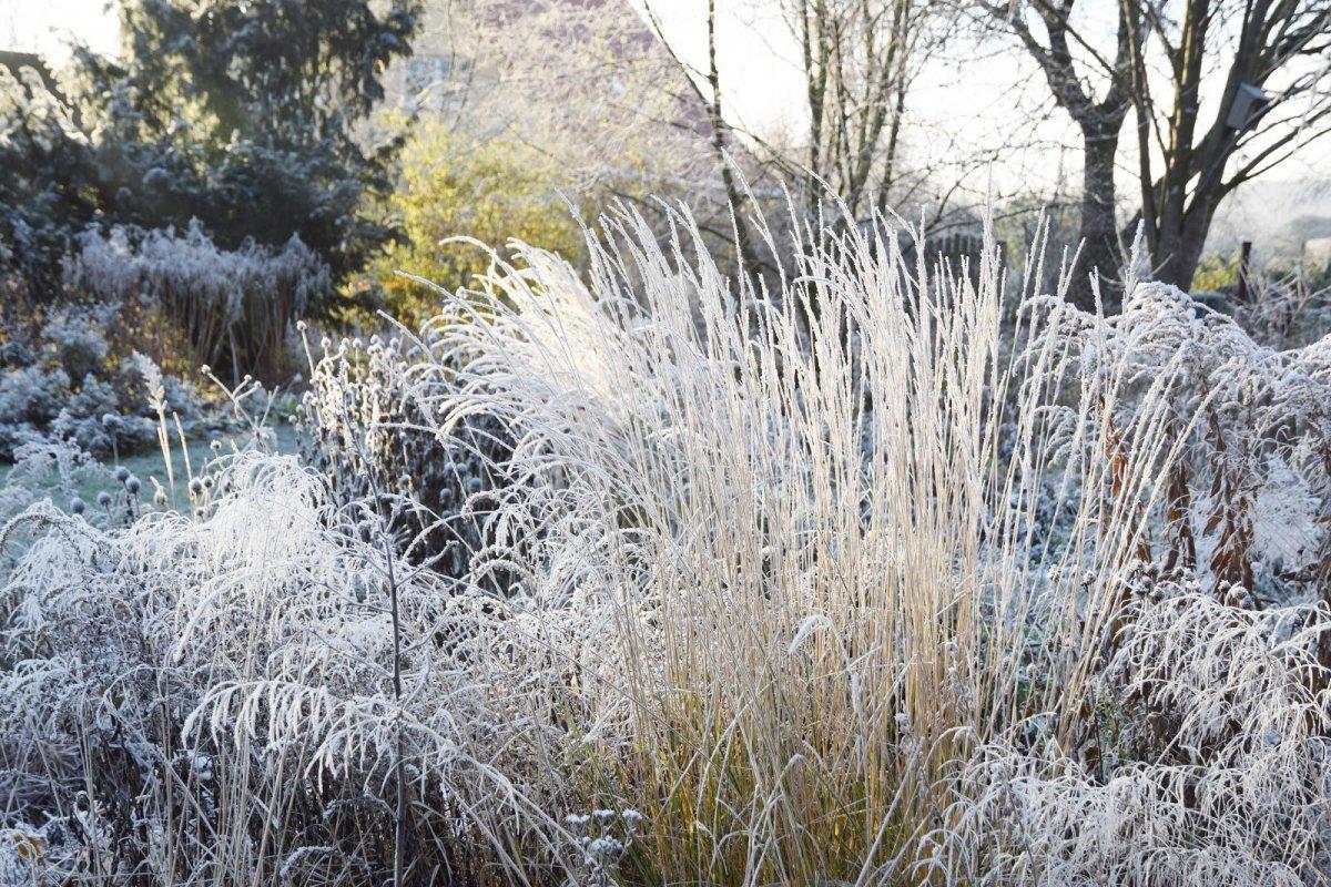 czvetnik-zimoj-rasteniya-dlya-zimnego-czvetnika-1
