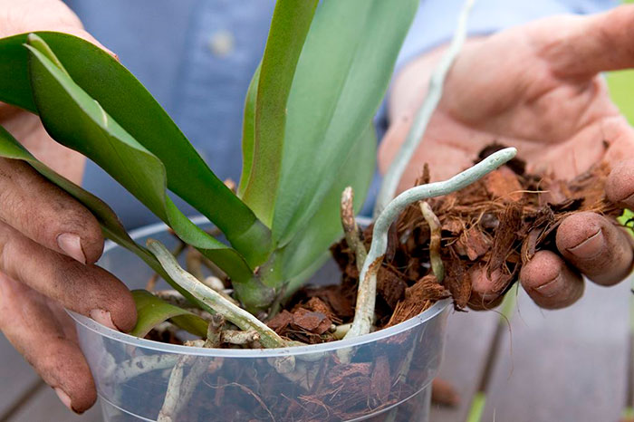 kak-prigotovit-grunt-dlya-orhidej-svoimi-rukami