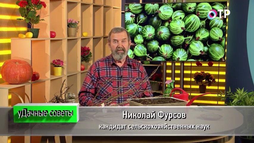 podzimnie-posadki-razmnozhenie-plodovo-yagodnyh-kultur-1
