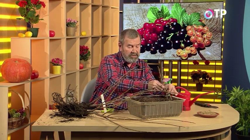 podzimnie-posadki-razmnozhenie-plodovo-yagodnyh-kultur-8