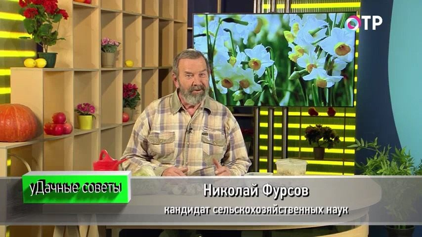 zimnee-razmnozhenie-lukovichnyh-ranneczvetushhih-rastenij-1