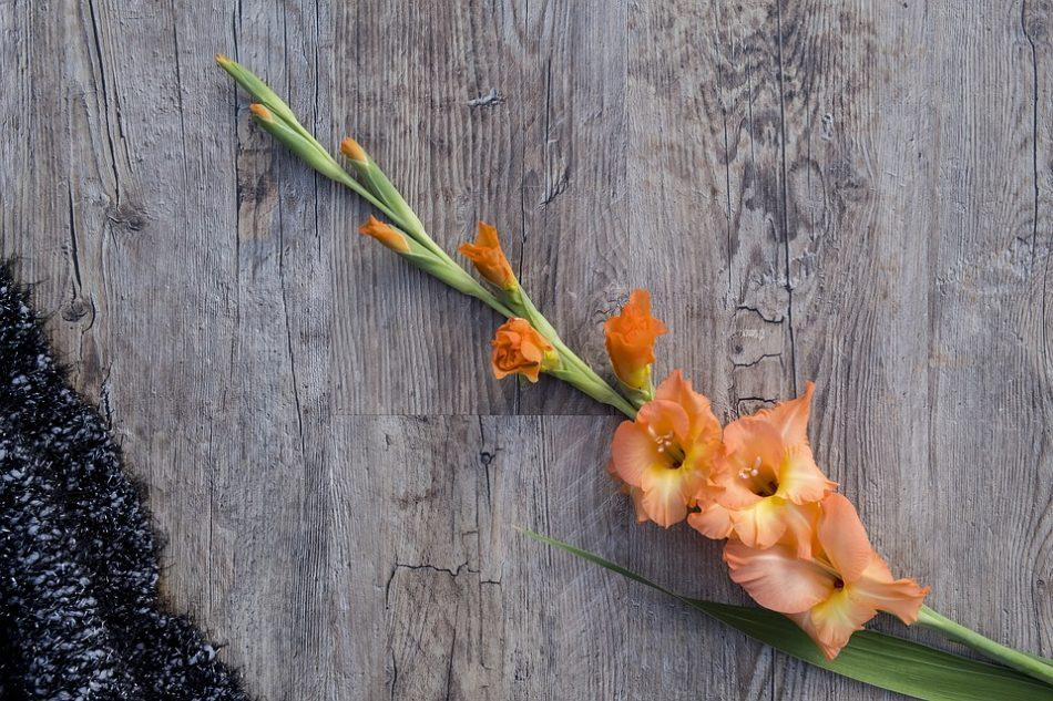 pochemu-gladiolusy-vyanut-sohnut-i-ne-uspevayut-raspustitsya-3