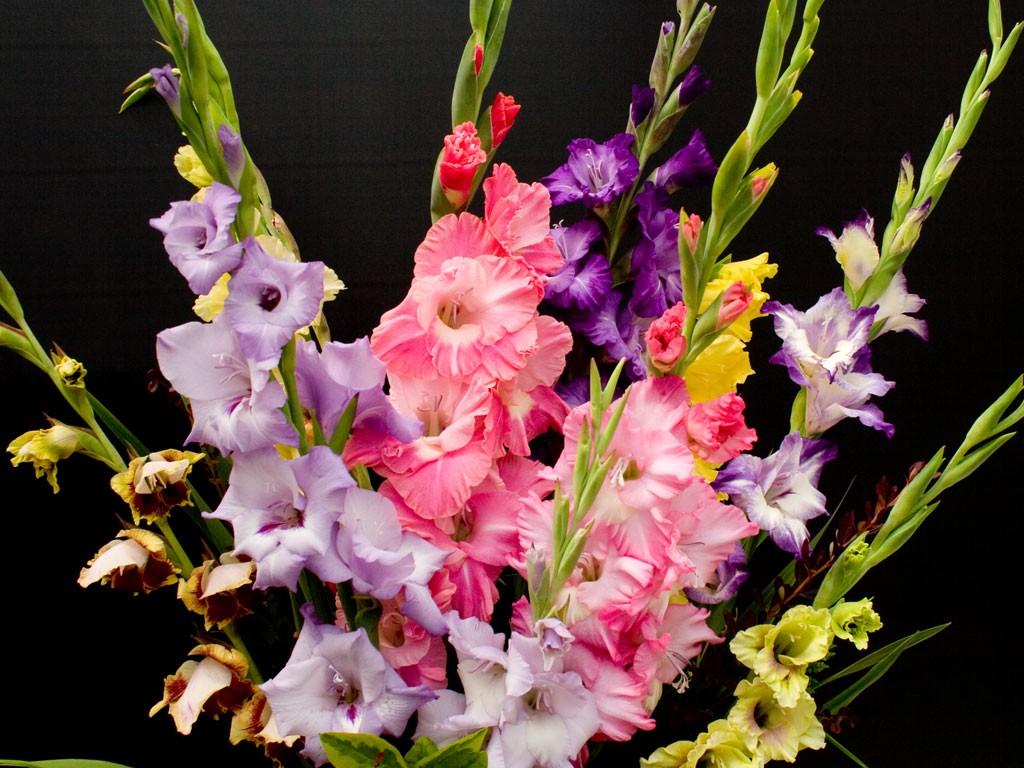 pochemu-gladiolusy-vyanut-sohnut-i-ne-uspevayut-raspustitsya-1