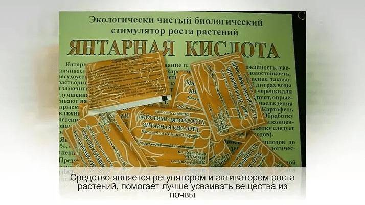 yantarnaya-kislota-dlya-rastenij-kak-prigotovit-rastvor-dlya-pochvy-2
