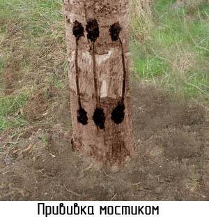 obrezka-derevev-postradavshih-ot-morozov-59