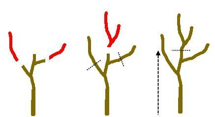vyrashhivanie-persikov-foto-video-chto-vhodit-v-vesennij-uhod-3