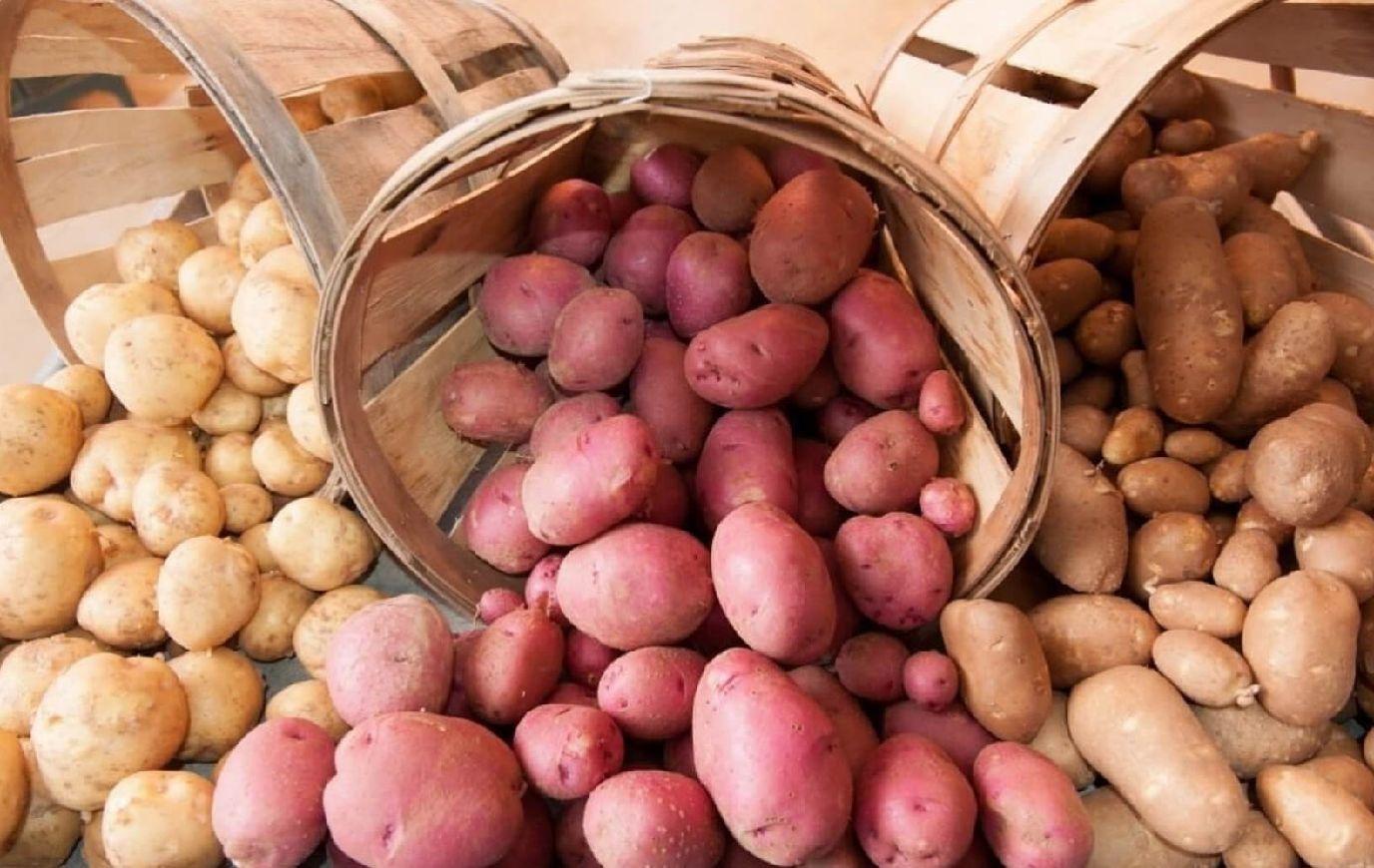 kak-hranit-kartofel-v-pogrebe-v-yashhikah-ili-rossypyu-1