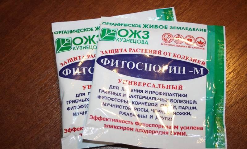 fitoftora-na-pomidorah-foto-simptomy-himicheskie-i-narodnye-metody-borby-3