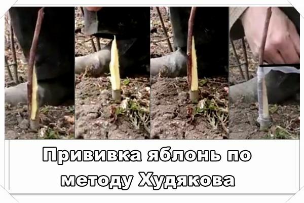 privivka-yabloni-foto-video-vidy-i-sposoby-privivki-podrobno-12