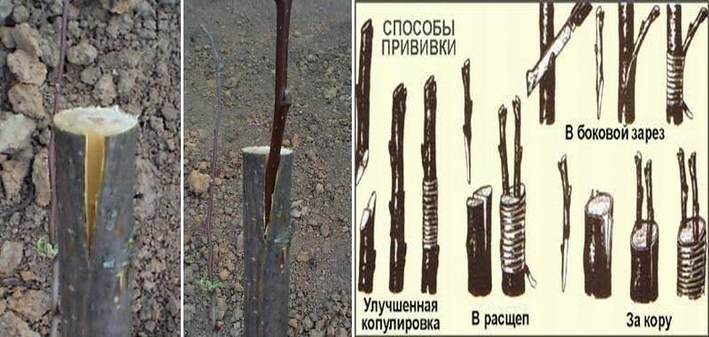 privivka-yabloni-foto-video-vidy-i-sposoby-privivki-podrobno-2
