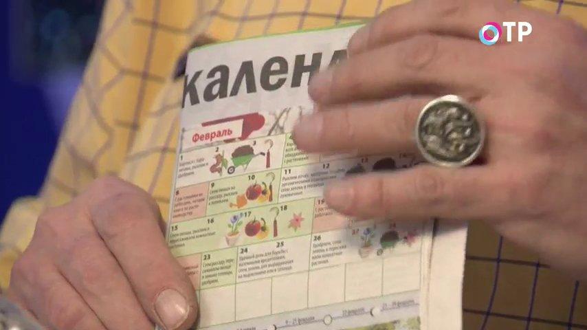 sekrety-vyrashhivaniya-rassady-udachnye-sovety-kandidata-selskohozyajstvennyh-nauk-2