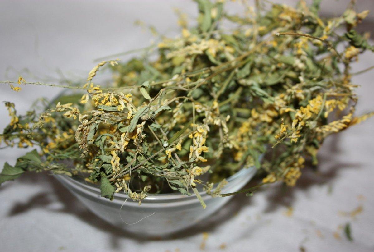 donnik-zheltyj-foto-lechebnye-svojstva-protivopokazaniya