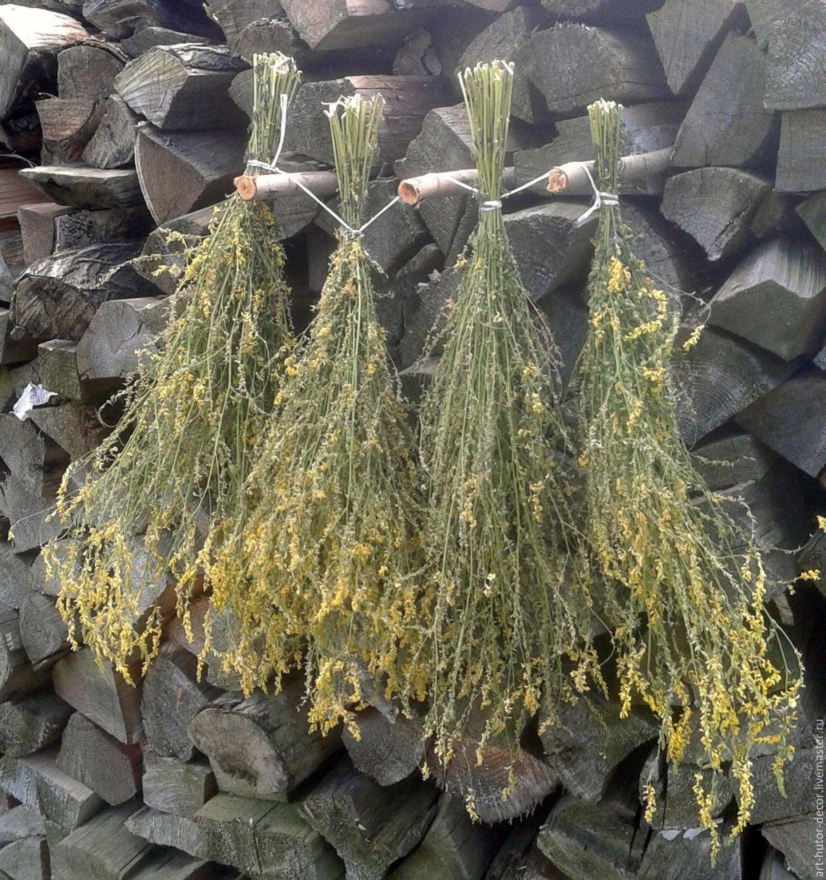 donnik-zheltyj-foto-lechebnye-svojstva-protivopokazaniya-3