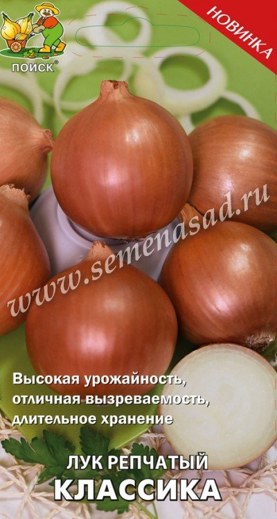 luchshie-novye-sorta-i-gibridy-repchatogo-luka-013