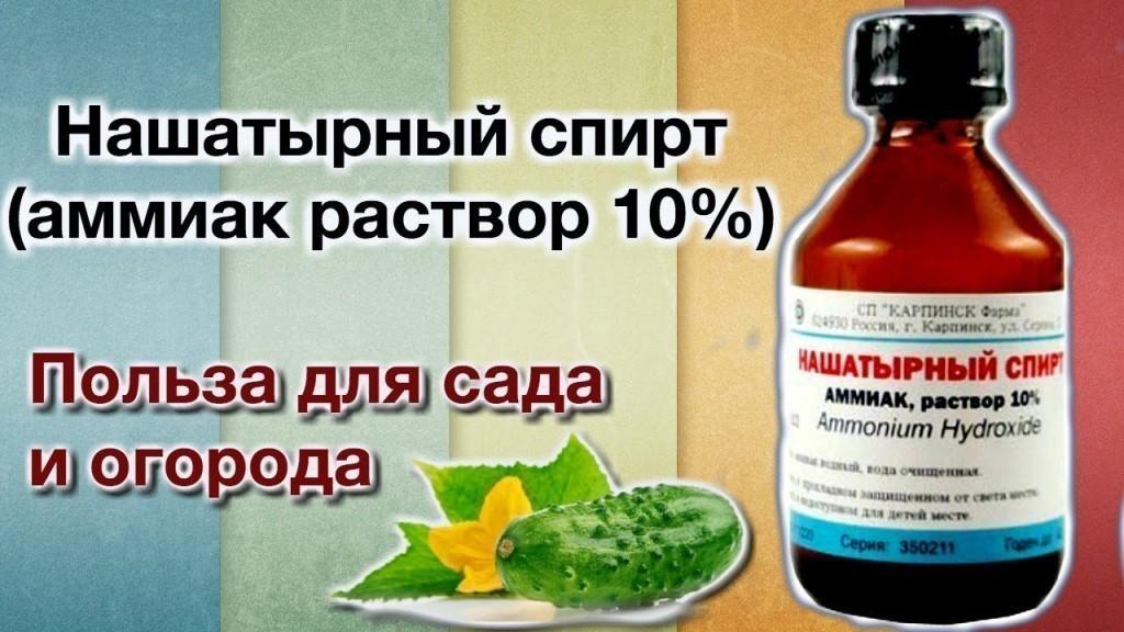 bolezni-i-vrediteli-ogurtsov-v-teplitse-i-otkrytom-grunte-prichiny-i-lechenie-25