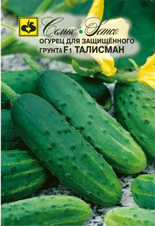 sorta-ogurczov-dlya-tepliczy-opisanie-harakteristiki-88