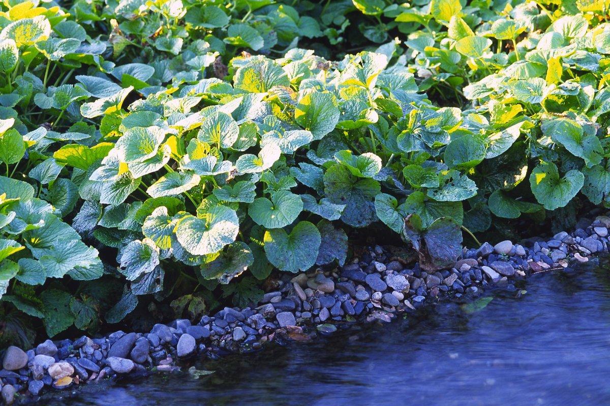 tropicheskie-plody-rastenij-kotorye-my-edim-foto-opisanie-14
