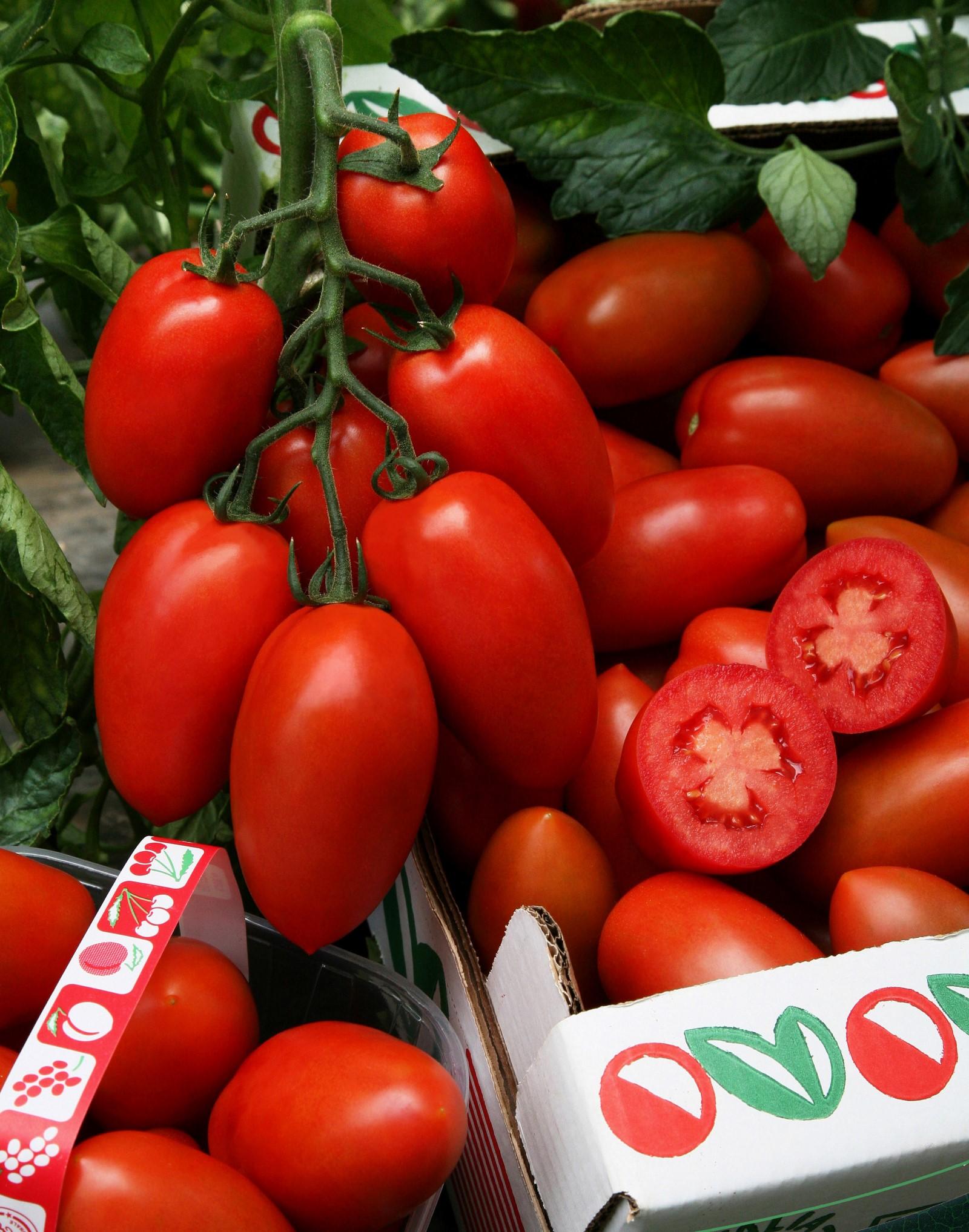 pomidory-dlya-teplits-foto-video-luchshie-novye-sorta-nazvaniya-opisanie-5