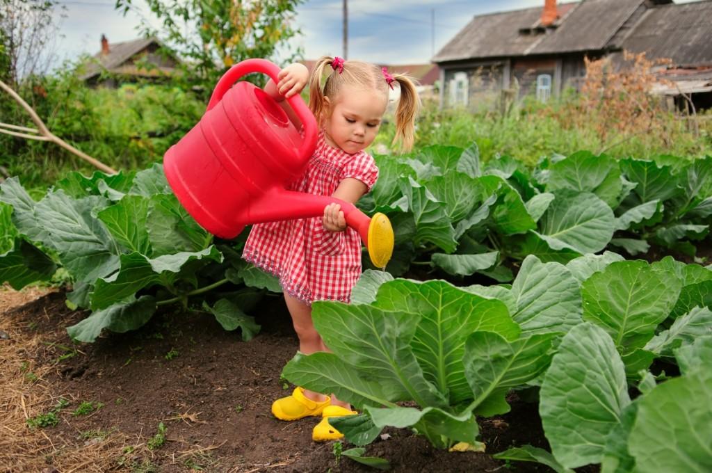 vyrashhivanie-kapusty-na-semena-kak-vybrat-i-vyrastit-semena-rannej-kapusty
