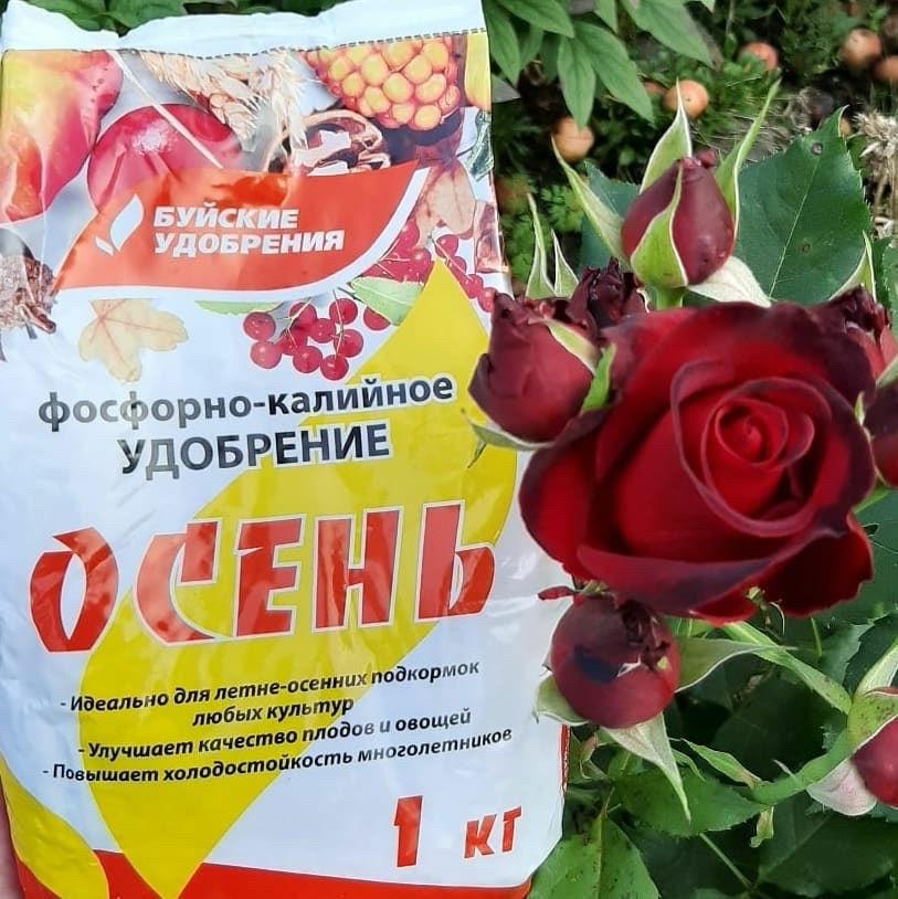 uhod-za-rozami-pravila-uhoda-vesnoj-letom-osenyu-zimoj-4