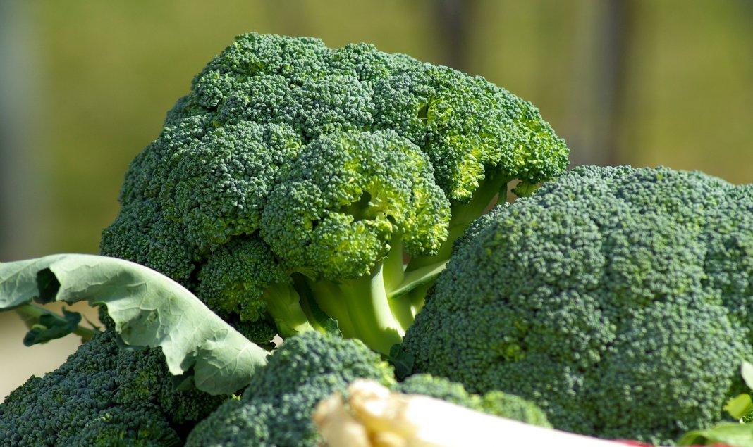 kapusta-brokkoli-foto-opisanie-sorta-posadka-i-uhod-v-otkrytom-grunte-1